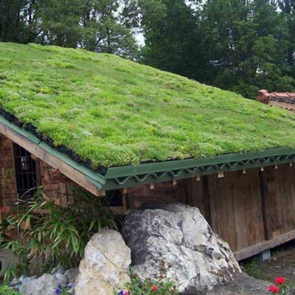 Газон на крыше своими руками